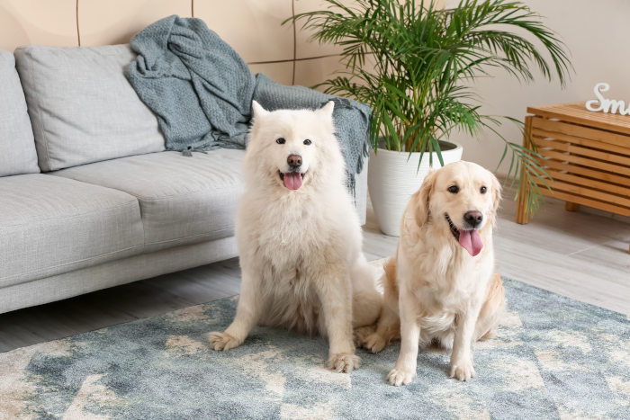 Vacation rental house rules template about pets